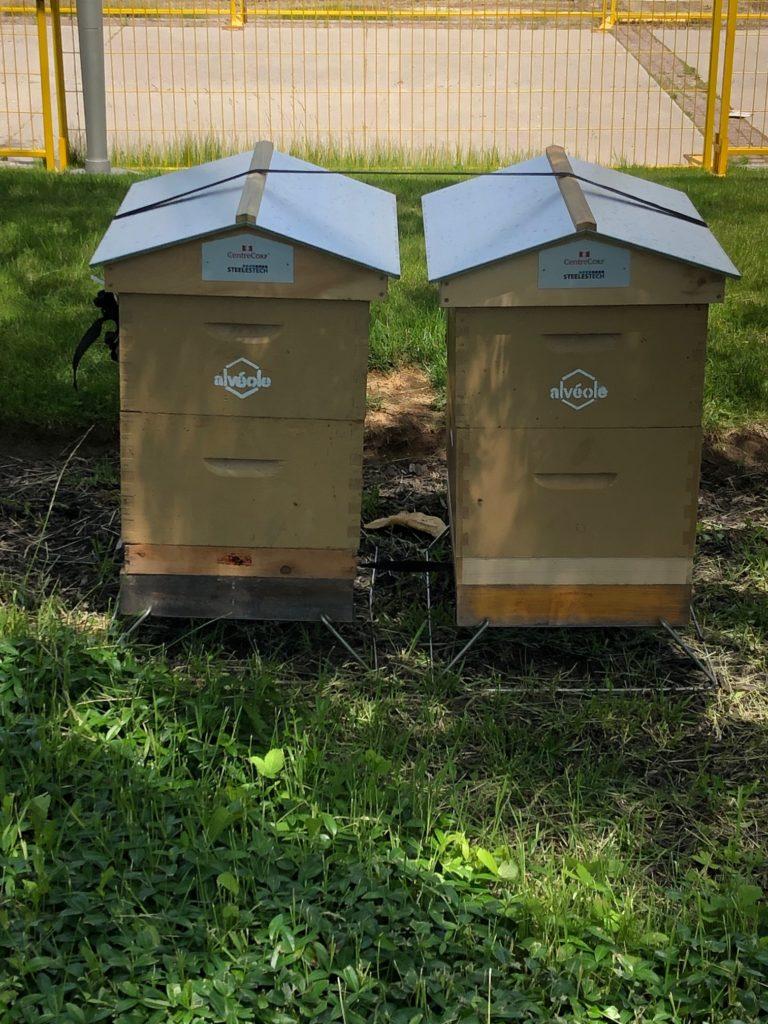 Aveole-beehive-workshop
